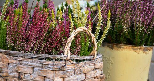 Le piante più belle piante per il balcone: idee e consigli