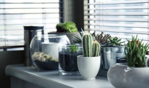 Arredare il bagno con le piante? Ecco alcuni consigli utili