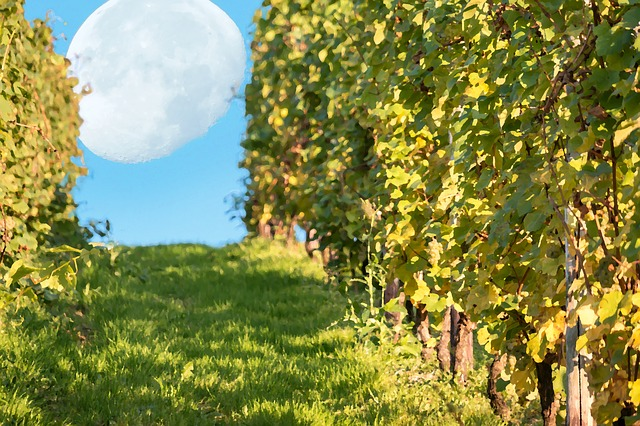 Atomizzatori per giardino: quale scegliere, opinioni e prezzi